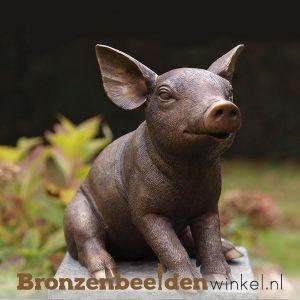 Bronzen varkens en zwijnen beelden